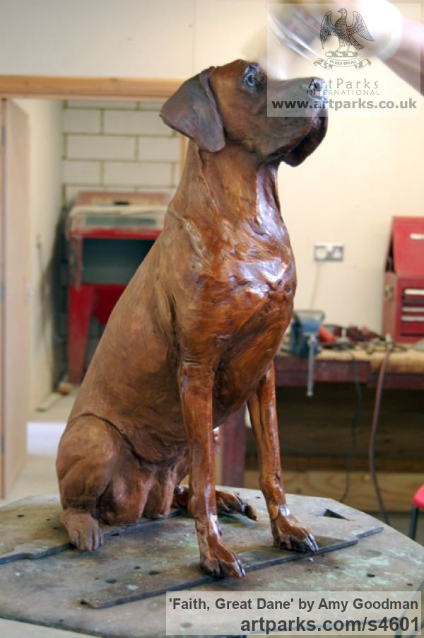 Bronze Dogs sculpture by sculptor Amy Goodman titled: 'Faith, Great Dane (Bronze Dog Life Portrait statue)' - Artwork View 3