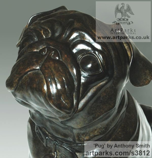 Bronze Dogs sculpture by sculptor Anthony Smith titled: 'Pug (commission Bronze Portrait sculpture)' - Artwork View 4
