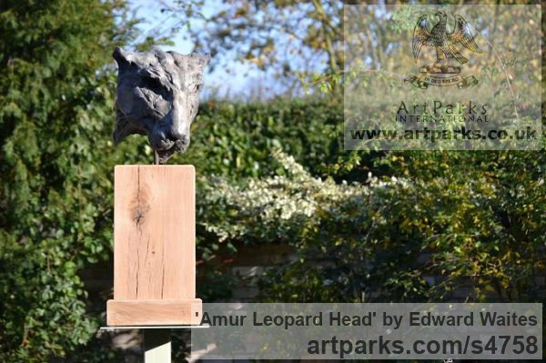 Bronze & Oak Cats Wild and Big Cats sculpture by sculptor Edward Waites titled: 'Amur Leopard Head (Bronze Big Cat Face sculpture)'