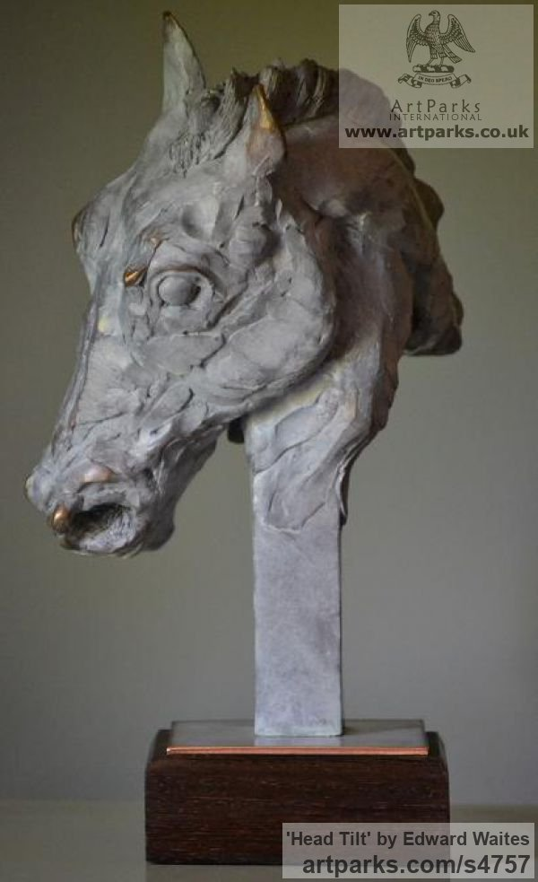Bronze Horse Sculpture / Equines Race Horses Pack HorseCart Horses Plough Horsess sculpture by sculptor Edward Waites titled: 'Head Tilt (Horse Pony Head Bust Stylised sculptures)' - Artwork View 2