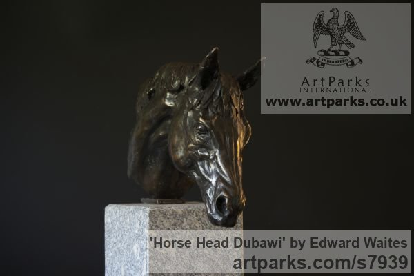 Bronze Horse Sculpture / Equines Race Horses Pack HorseCart Horses Plough Horsess sculpture by sculptor Edward Waites titled: 'Horse Head (Dubawi) (Small Bust Indoor sculpture)' - Artwork View 3