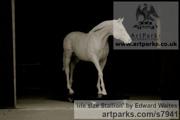 Clay model to be cast in bronze Garden Or Yard / Outside and Outdoor sculpture by sculptor Edward Waites titled: 'life size Stallion (Bronze Horse Walking sculptures)'