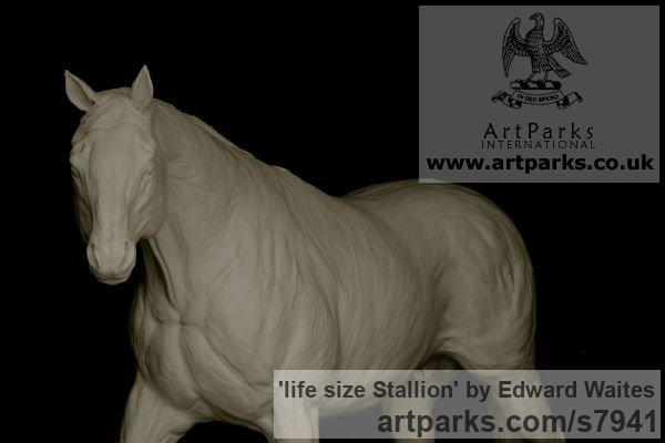 Clay model to be cast in bronze Garden Or Yard / Outside and Outdoor sculpture by sculptor Edward Waites titled: 'life size Stallion (Bronze Horse Walking sculptures)' - Artwork View 2