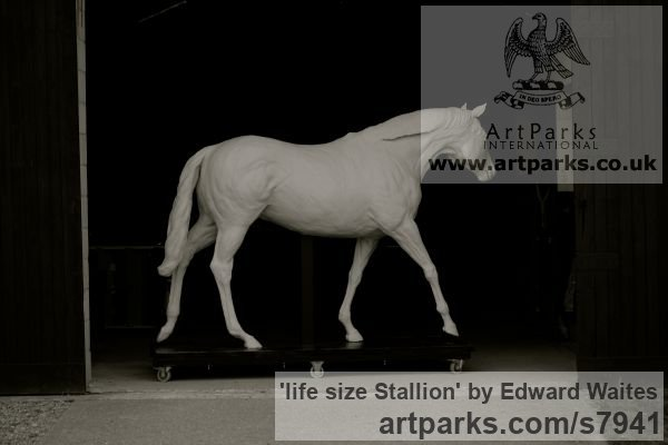 Clay model to be cast in bronze Garden Or Yard / Outside and Outdoor sculpture by sculptor Edward Waites titled: 'life size Stallion (Bronze Horse Walking sculptures)' - Artwork View 3