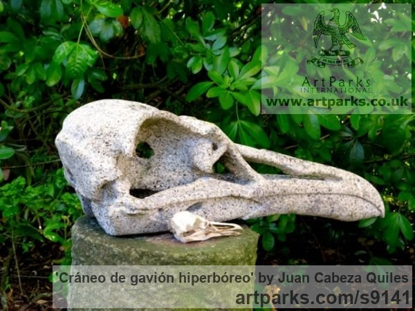 Granito, talla directao Garden Or Yard / Outside and Outdoor sculpture by sculptor Juan Cabeza Quiles titled: 'cr�neo de gavi�n hiperb�reo (Carved Bird Scull)' - Artwork View 4