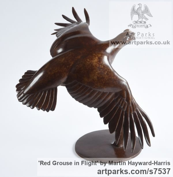 Bronze Birds in Flight, Birds Flying Sculptures or sculpture by sculptor Martin Hayward-Harris titled: 'Red Grouse in Flight (Flying Game Bird statue)' - Artwork View 2