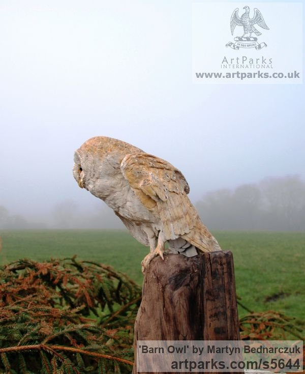 Wood Carving Varietal Mix of Bird Sculptures or sculpture by sculptor Martyn Bednarczuk titled: 'Barn Owl (Carved Wood Realistic Perched Resting Raptor Bird carvings)'
