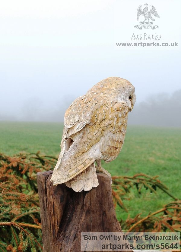 Wood Carving Varietal Mix of Bird Sculptures or sculpture by sculptor Martyn Bednarczuk titled: 'Barn Owl (Carved Wood Realistic Perched Resting Raptor Bird carvings)' - Artwork View 2
