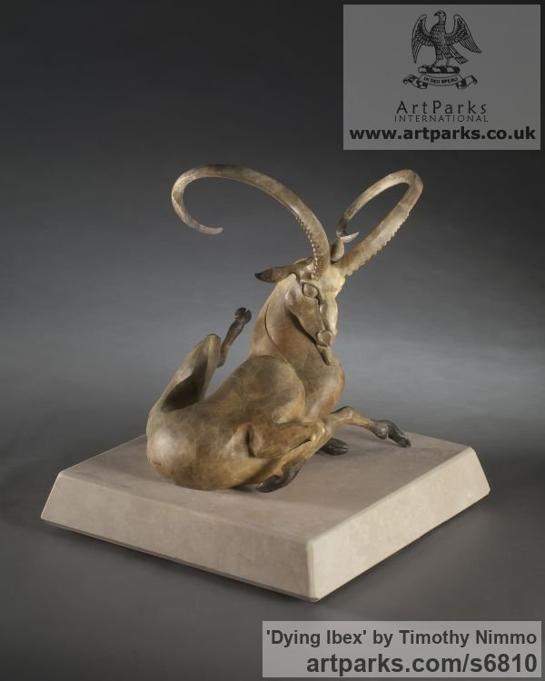 Bronze Wild Animals and Wild Life sculpture by sculptor Timothy Nimmo titled: 'Dying Ibex (Twisted Contorted Ibex Bronze sculpture)' - Artwork View 2