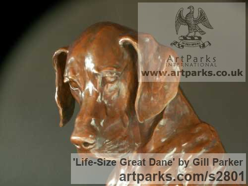 Bronze Garden Or Yard / Outside and Outdoor sculpture by sculptor Gill Parker titled: 'life size Great Dane (Big Bronze Dog Sitting Thinking sculptures)' - Artwork View 2