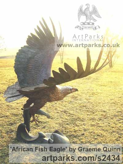 Bronze Big Large Birds sculpture sculpture by sculptor Graeme Quinn titled: 'life size African Fish Eagle (Bronze Flying Raptor sculptures/statues)' - Artwork View 2