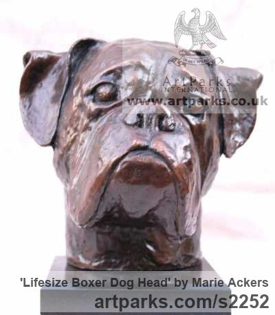 Bronze resin ( bronze on order) Dogs sculpture by sculptor Marie Ackers titled: 'life size Boxer Dog Head study (Bronze Portrait Bust sculpture/statue)' - Artwork View 1