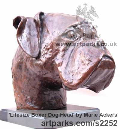 Bronze resin ( bronze on order) Dogs sculpture by sculptor Marie Ackers titled: 'life size Boxer Dog Head study (Bronze Portrait Bust sculpture/statue)' - Artwork View 2