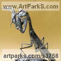 Insect Sculpture, to include Bees, Ants, Moths Butterflies etc by sculptor artist Anne Shingleton titled: 'Wedding Sonata (Out Size Big Giant bronze Praying Mantis statue/sculpture)' in Patinated bronze