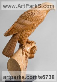 Lime wood Birds of Prey / Raptors sculpture by Bill Prickett titled: 'Harris`s Hawk on Glove (Original Carved Wood sculpture)'