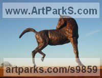 Foundry bronze Horses Small, for Indoors and Inside Display Statues statuettes Sculptures figurines commissions commemoratives sculpture by Graham High titled: 'PREENING HORSE (Small Bronze Scratching Horse stature)'