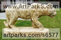 Ham Stone Cats Wild and Big Cats sculpture by sculptor Pippa Unwin titled: 'Tiger (Pacing Stalking Hunting Big Cat carving statue)'